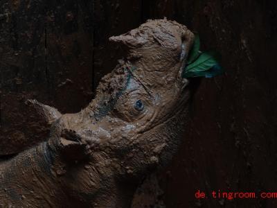 Das Sumatra-Nashorn mag es offenbar schlammig. Foto: WWF Deutschland/dpa