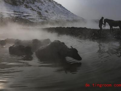 Wasserbüffel baden in einer heißen Quelle in den Bergen im Südosten der Türkei. Foto: Emrah Gurel/AP/dpa