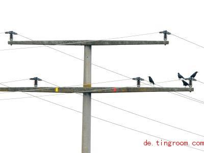 Diese Krähen bekommen keinen Stromschlag. Plastik-Hauben schützen sie davor. Foto: Dieter Haas/Nabu/dpa