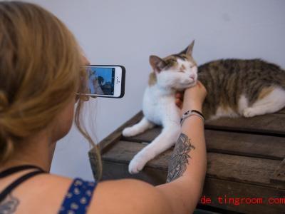 Eine neue App gibt Tipps fürs Haustier, auch einen Steckbrief mit Foto kann man anlegen. Foto: Christina Sabrowsky/dpa