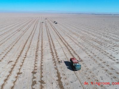 Dort wo sich jetzt noch eine Wüste erstreckt, soll bald ein Busch-Wald wachsen. Foto: Yu Dongsheng/XinHua