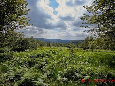 Im Natio<em></em>nalpark Hunsr&uuml;ck-Hochwald darf die Natur teilweise wachsen, wie sie will. Foto: Thomas Frey/dpa