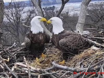 Justice und Liberty sind wieder zusammen. Foto: Uncredited/Earth Co<em></em>nservation Corps/AP