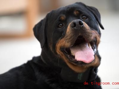 Yam ist ein Spürhund. Er wurde unter anderem darauf trainiert, Handys zu erschnüffeln. Foto: Federico Gambarini/dpa
