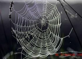 Das Geheimnis der Spinnenf?den