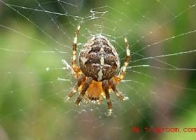 Spinnen: faszinierend, nützlich und meistens harmlos