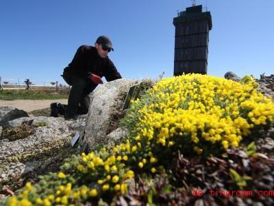 Mitarbeiter im Brockengarten kümmern sich um die empfindlichen Hochgebirgspflanzen. Foto: Matthias Bein/dpa-Zentralbild/ZB