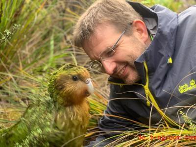Forscher helfen den Kakapos, Nachwuchs zu bekommen. Foto: Deidre Vercor/DOC/dpa
