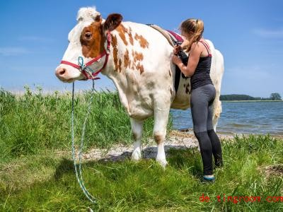 Paulina Zargus reitet regelmäßig auf dem Rind Mambo. Foto: Jens Büttner/dpa-Zentralbild/dpa