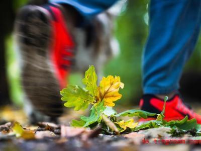 Das bunte Herbstlaub wird in den nächsten Tagen nass. Foto: Frank Rumpenhorst