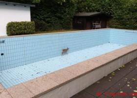 Befreit aus dem Schwimmbecken