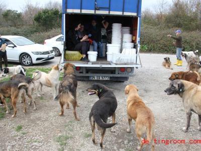 Die Helfer bringen den Straßenhunden selbstgekochtes Futter. Foto: Christine-Felice Röhrs/dpa