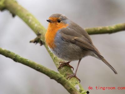Ohne Blätter am Baum sind Vögel leichter zu sehen: Ein Rotkehlchen sitzt auf einem Ast. Foto: Julian Stratenschulte/dpa