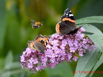 Es gibt sehr viele verschiedene Insekten auf der Welt, zum Beispiel Schmetterlinge und Bienen. Foto: Carsten Rehder/dpa