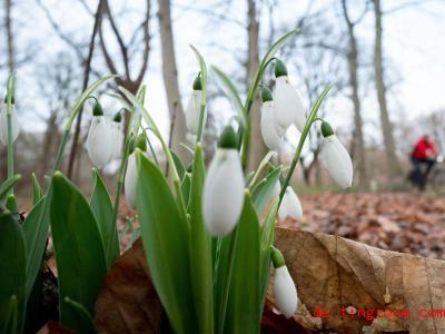 Der Mo<em></em>nat Januar war weltweit beso<em></em>nders mild. In Deutschland blühen schon einige Pflanzen. Foto: Kay Nietfeld/dpa