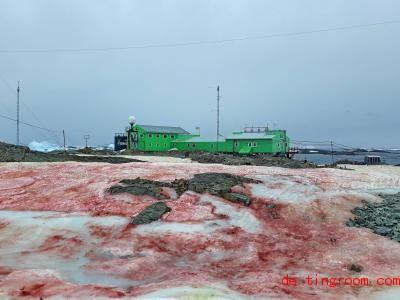 Eine Alge hat den Schnee auf diesem Bild rot gefärbt. Foto: Ministerium für Bildung und Wissenschaft der Ukraine/dpa