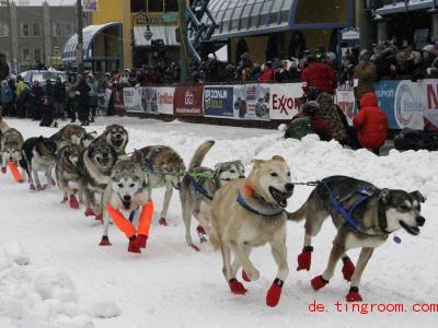 In Alaska hat ein berühmtes Rennen für Hundeschlitten begonnen. Foto: Mark Thiessen/AP/dpa