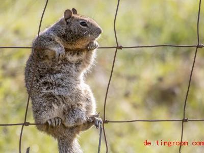 Was macht denn der Ziesel da? Offenbar klettert er gerne im Zaun herum. Foto: Robin Loznak/ZUMA Wire/dpa