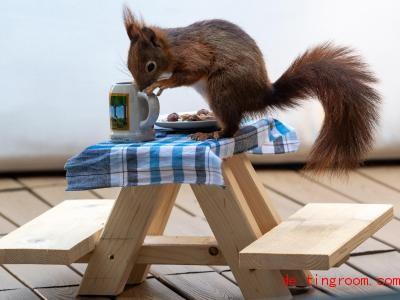 Eigentlich isst man ja nicht auf dem Tisch. Aber das ist dem Eichhörnchen wohl egal. Foto: Peter Kneffel/dpa
