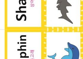 看图学韩语之韩英双语词汇【动物类shark】
