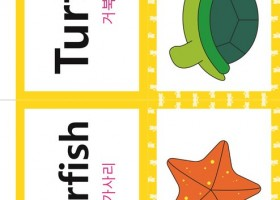 看图学韩语之韩英双语词汇【动物类turtle】