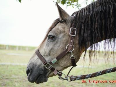 Unbekannte Täter haben Pferde verletzt. Die Polizei gibt nun Tipps zum Schutz der Tiere. Foto: Uwe Anspach/dpa