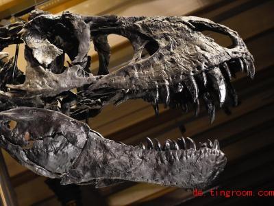 Das Naturkundemuseum erzählt jetzt in einem Podcast Geschichten über Saurier und andere spannende Tiere. Foto: Jordan Raza/dpa
