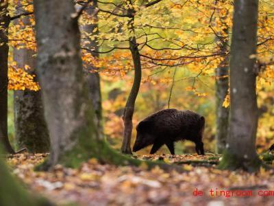 In machen Gegenden Deutschlands finden Wildtiere gerade reichlich Futter, vor allem Eicheln und Bucheckern. Foto: Lino Mirgeler/dpa