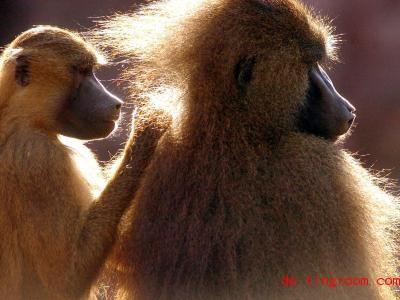 Auch Affen legen Wert auf Begrüßungen. Foto: Peter Roggenthin/dpa