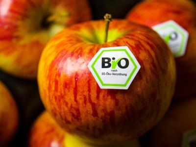 Für Bio-Lebensmittel wie diesen Apfel gelten bestimmte Regeln beim Anbau. Foto: picture alliance / David Ebener/dpa