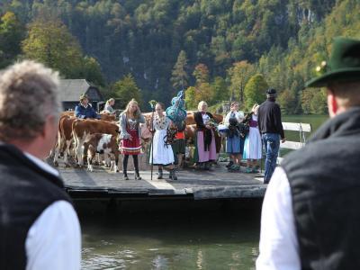Immer zu Beginn und zum Ende des Sommers fahren Kühe über den Königssee. Foto: Kilian Pfeiffer/dpa