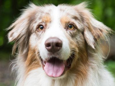 Hunde drücken viel über ihre Körpersprache aus. Foto: Oliver Dietze/dpa