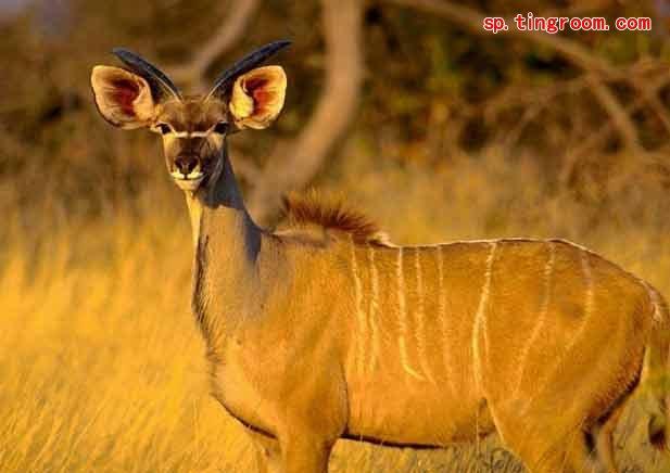 西班牙语词汇:野生动物类