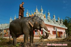 泰国将修订法律全面禁止象牙交易